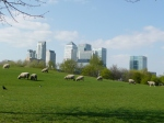 yes..real sheep in the isle of dogs.